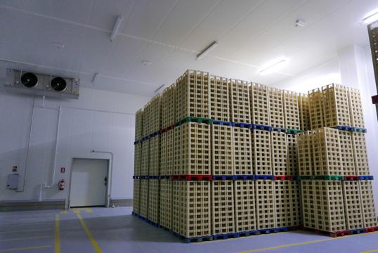 Reforma integral y ampliación de planta de queso de pasta prensada
